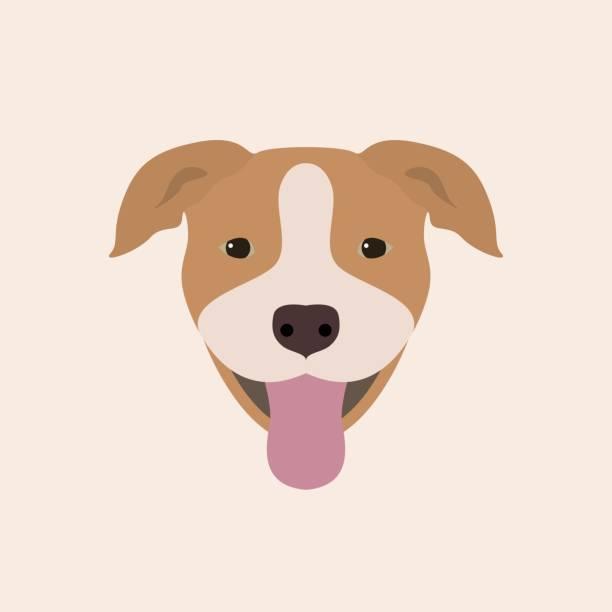 Best Pit Bull Terrier Illustrations, Royalty-Free Vector