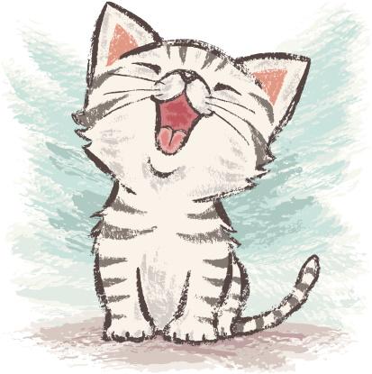 American Shorthair happy