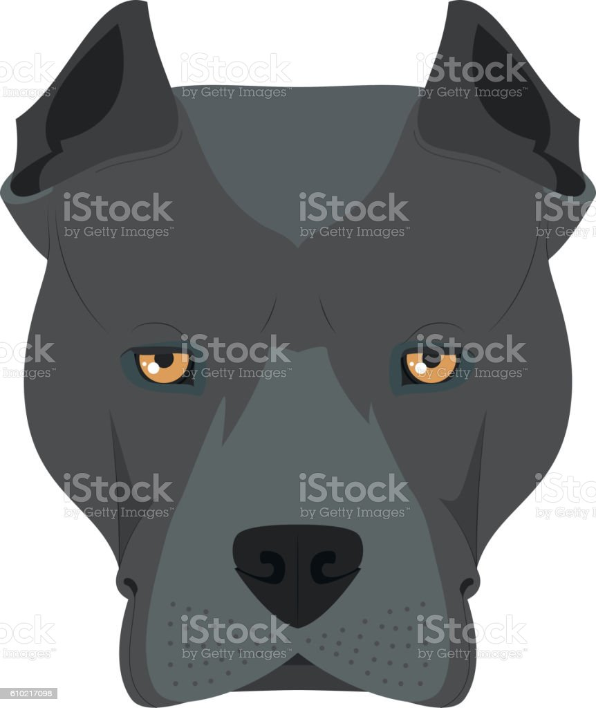 American Staffordshire Terrier dog isolated on white background vector art illustration
