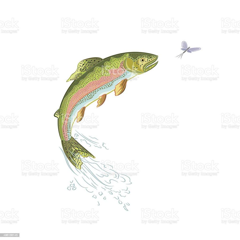 American trout jumps vector art illustration