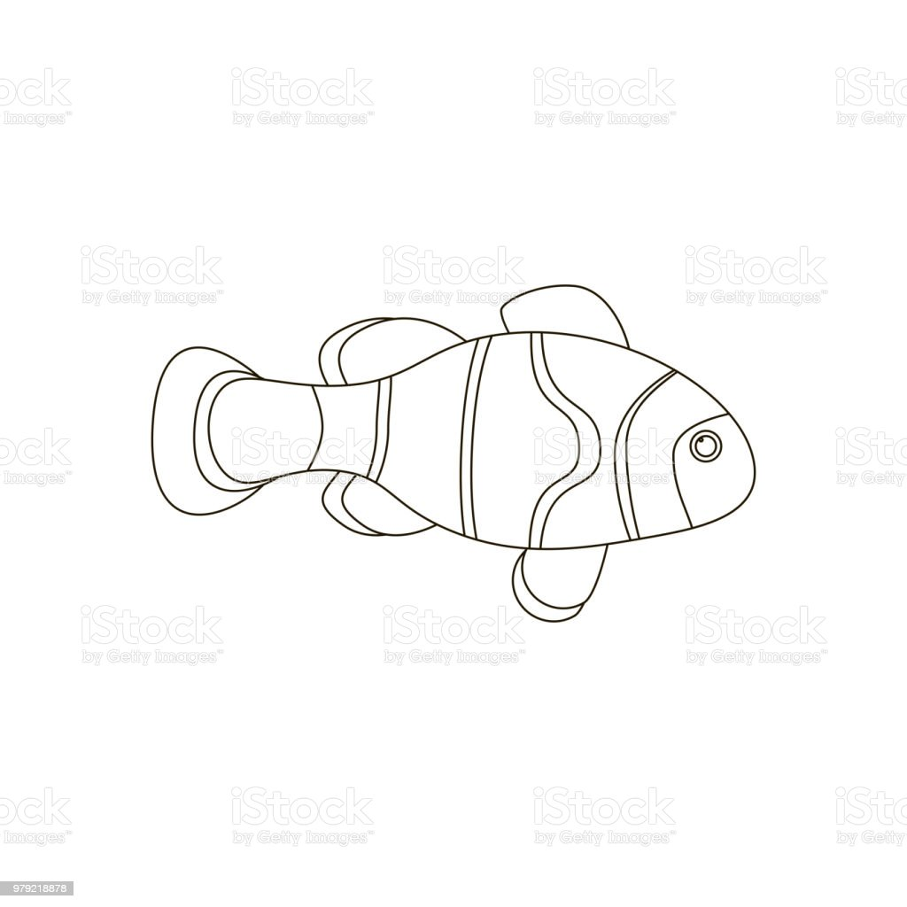 amphiprion clown fish coloring pages stock illustration download image now istock amphiprion clown fish coloring pages stock illustration download image now istock