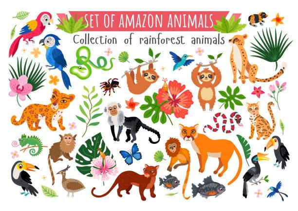 An Amazon rainforest jungle animals set. Vector Africa savannah animals set. Wild tropic animals collection in flat style isolated on white background. Including elephant, giraffe, zebra, snake, rhino, parrot, lion, hippo, leopard, monkey, meerkat animal stock illustrations