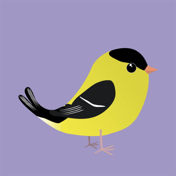 An American goldfinch comic illustration An American goldfinch cartoon illustration on a purplebackground american goldfinch stock illustrations