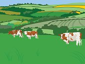 cows grazing out in the fields