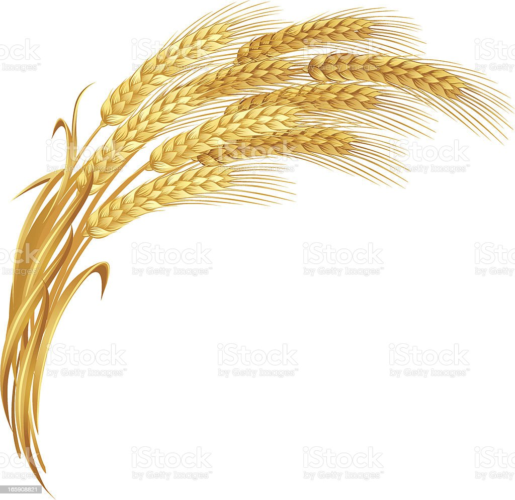An artistic impression of golden ears of wheat vector art illustration