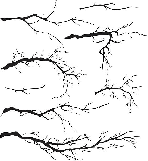 An Assortment of Bare Tree Isolated Branches Silhouettes An Assortment of Bare Tree Isolated Branch Silhouettes. The branches are a vary of lengths and sizes.  Each branch can be moved and manipulated. Some of the tree branches are simple and some are very detailed. Black tree branch silhouettes. branch plant part stock illustrations