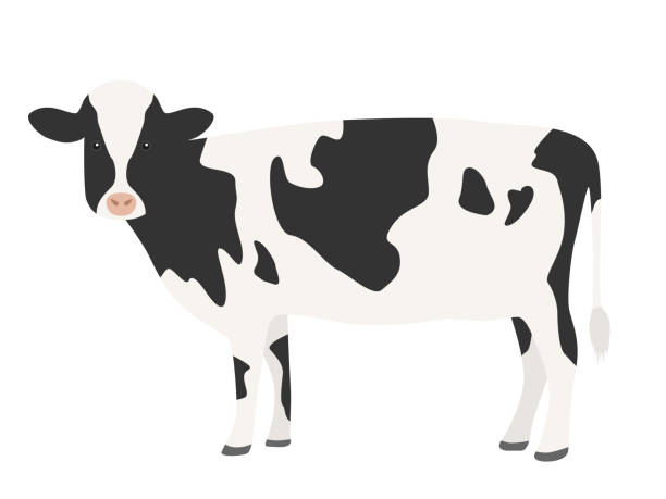 An illustration of a cow. An illustration of a cow. domestic cattle stock illustrations