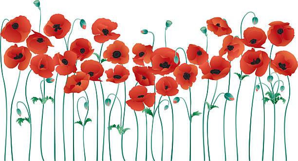 Best Poppy Illustrations, Royalty-Free Vector Graphics & Clip Art - iStock