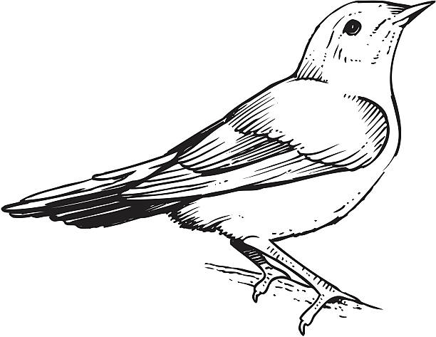 stockillustraties, clipart, cartoons en iconen met an illustration of a warbler bird - zanger vogel