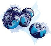Grunge style blueberries - vector illustration