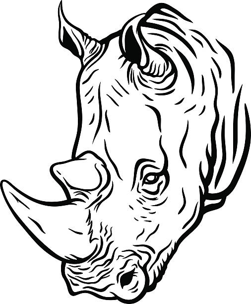 Best Drawing Of A Rhino Head Illustrations, Royalty-Free