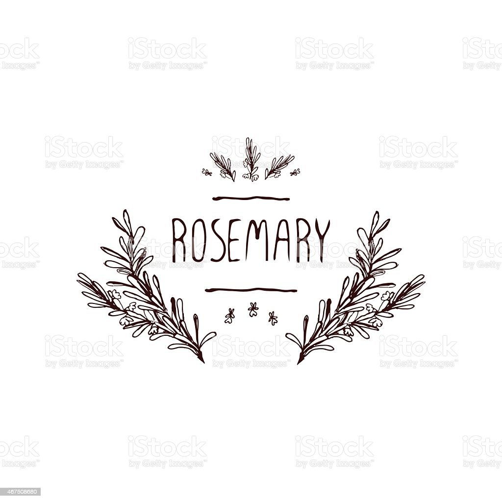 An illustration of rosemary herbs and spices vector art illustration
