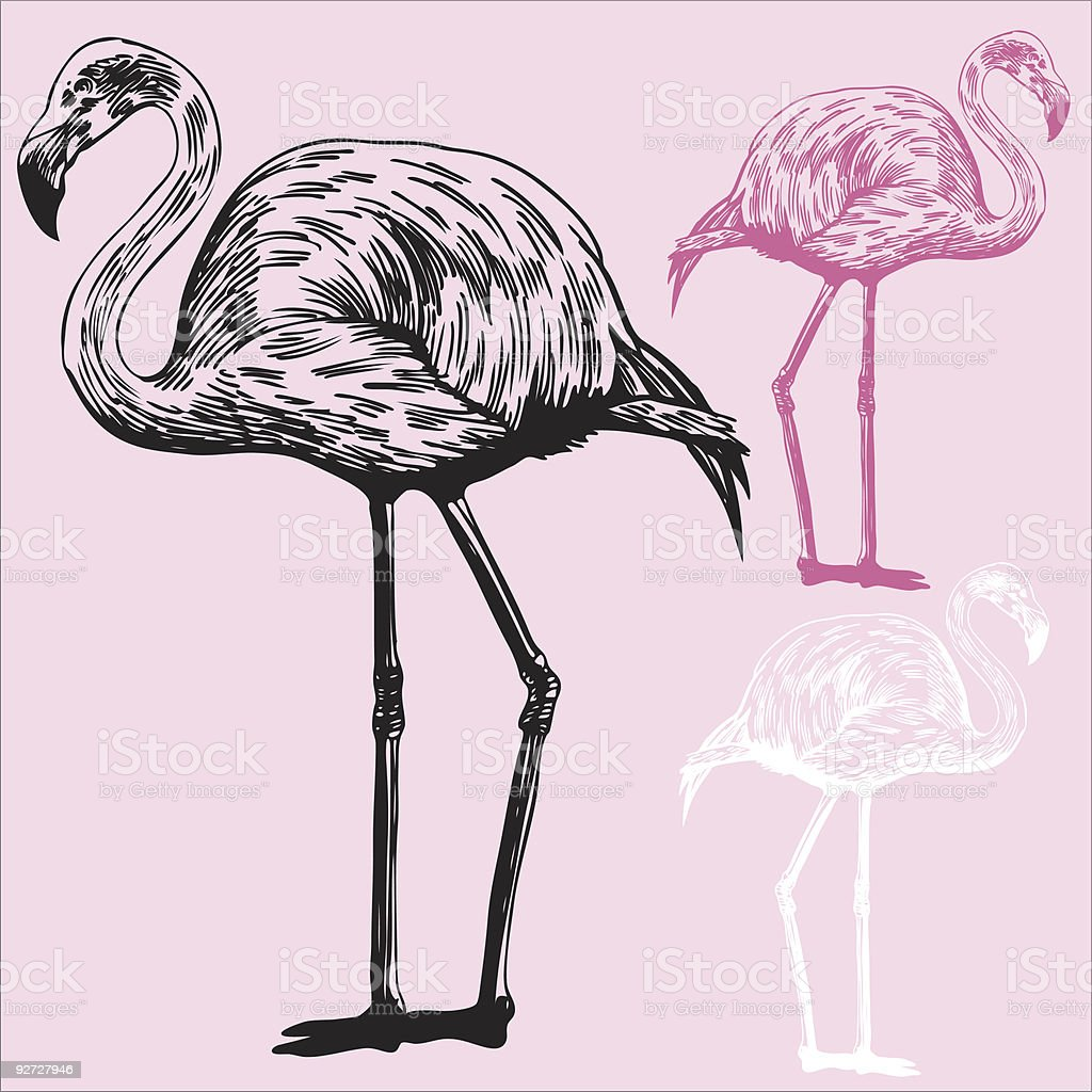 An illustration of three colored flamingos royalty-free stock vector art