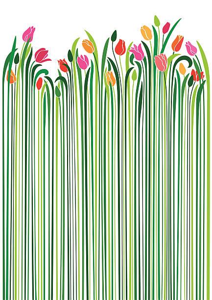 bildbanksillustrationer, clip art samt tecknat material och ikoner med an illustration of tulips with very long green stems - tulpaner