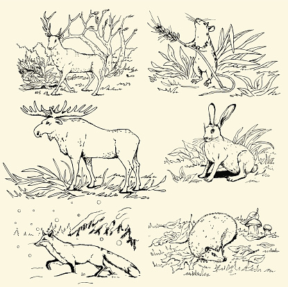 An illustration of various animals in the wild