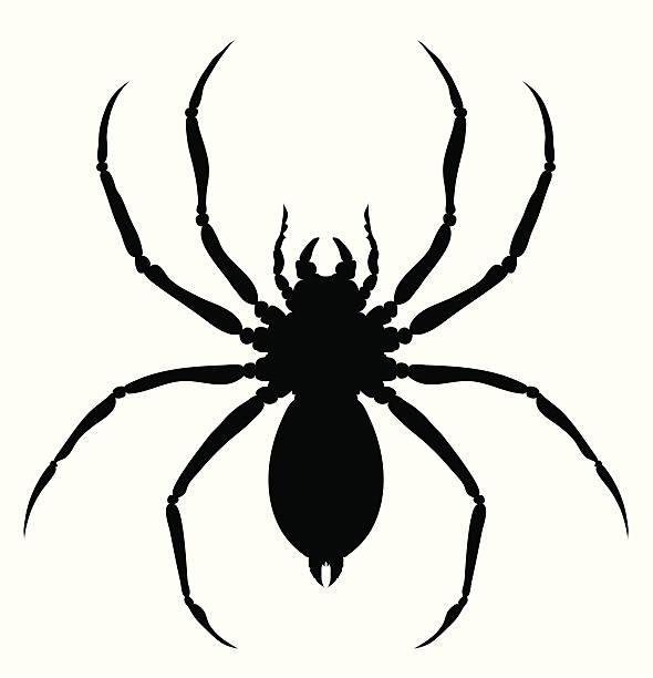 Royalty free spider clip art vector images - Spider outline clip art ...