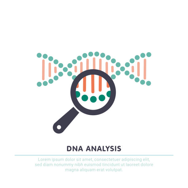 DNA analysis, genetics testing. dna chain in magnifying glass sign. genetic engineering, cloning, paternity testing DNA analysis icon, genetics testing. dna chain in magnifying glass sign. genetic engineering, cloning, paternity testing. vector illustration test drive stock illustrations
