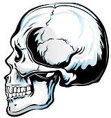 Anatomic Skull Vector Art. Detailed hand-drawn illustration of skull. Grunge weathered illustration.