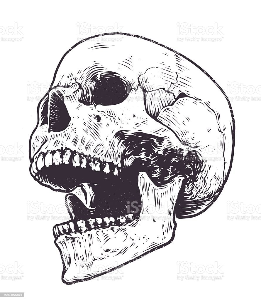 Anatomic Skull Vector Stock Vector Art Amp More Images Of