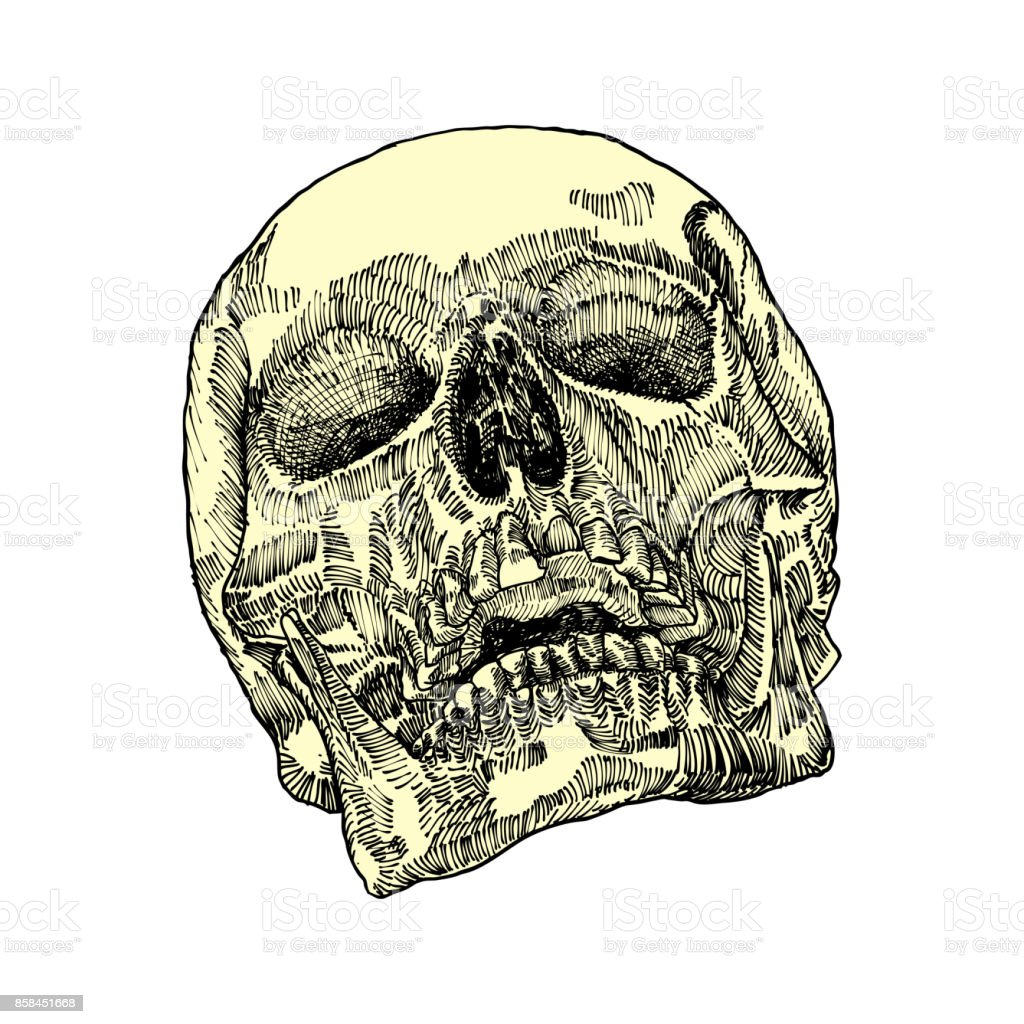 Anatomic Skull Weathered And Museum Quality Detailed Hand Drawn