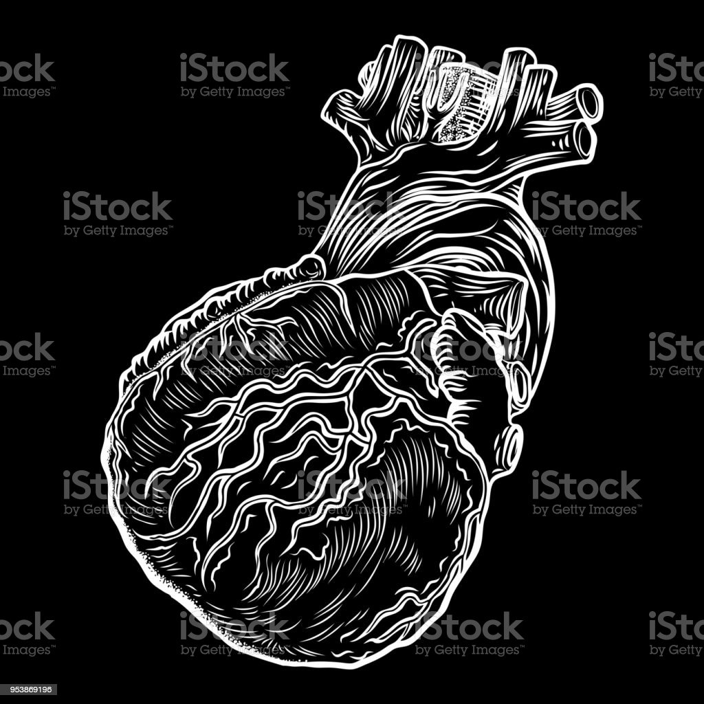 Anatomical Heart Hand Drawn Flash Tattoo Concept Of Anatomy Heart
