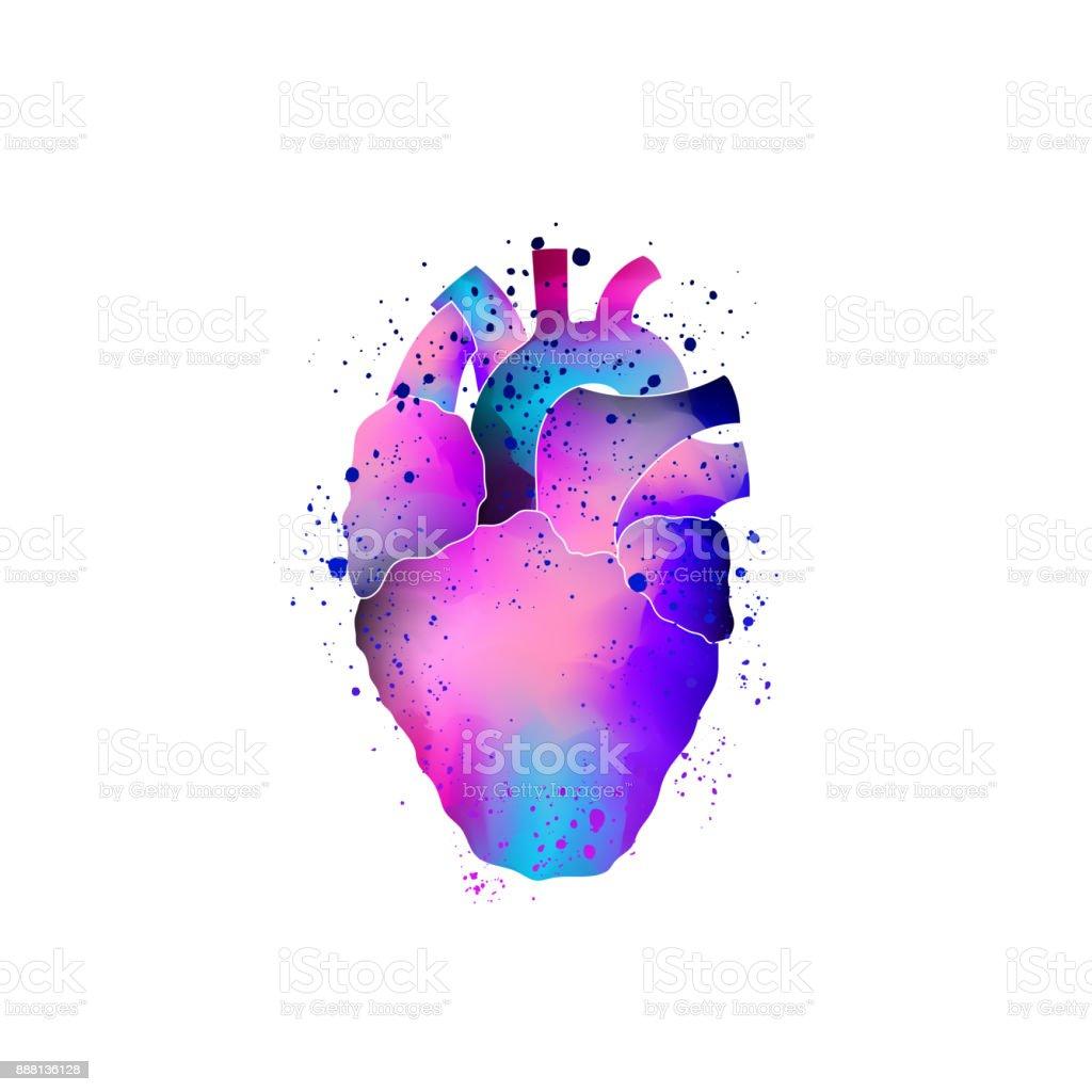 Ilustración de Anatomía Corazón Aislado y más banco de imágenes de A ...