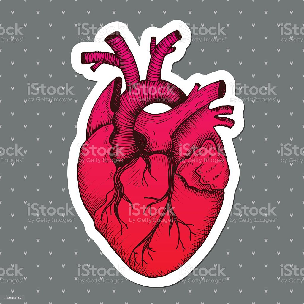 Anatomical Heart Vector Vintage Style Detailed Illustration Human ...