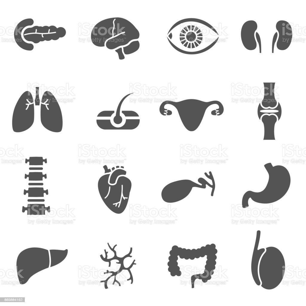 anatomical organs, icons set. - illustrazione arte vettoriale