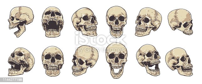 Hand-drawn Anatomical Skulls Vector Set.
