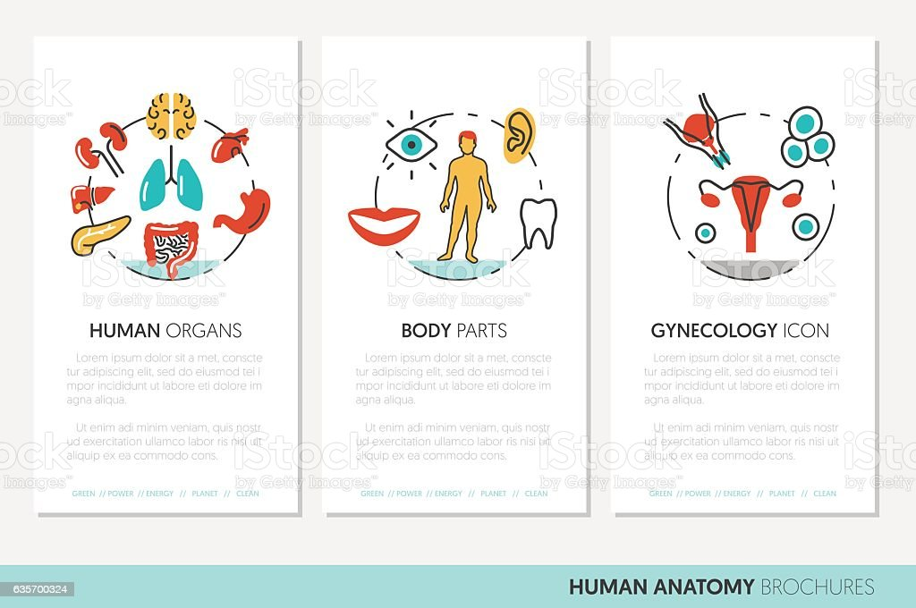 Anatomy Business Brochure Template royalty-free anatomy business brochure template stock vector art & more images of anatomy