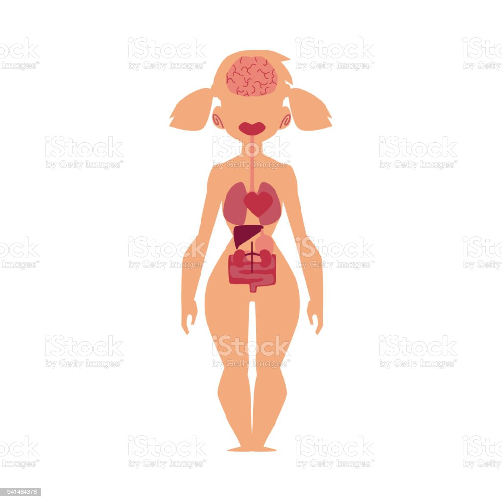 Anatomy Chart Human Internal Organs Female Body Stock Vector Art ...