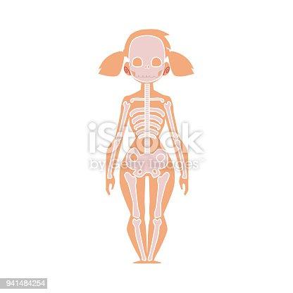 Diagramm Der Anatomie Des Menschlichen Skeletts Weiblichen Körper ...