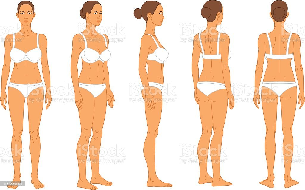 Anatomy - Female Human Body vector art illustration
