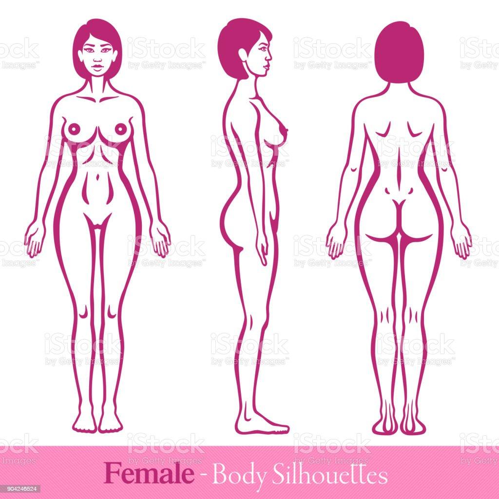 Anatomieweibliche Menschliche Körper Stock Vektor Art und mehr ...