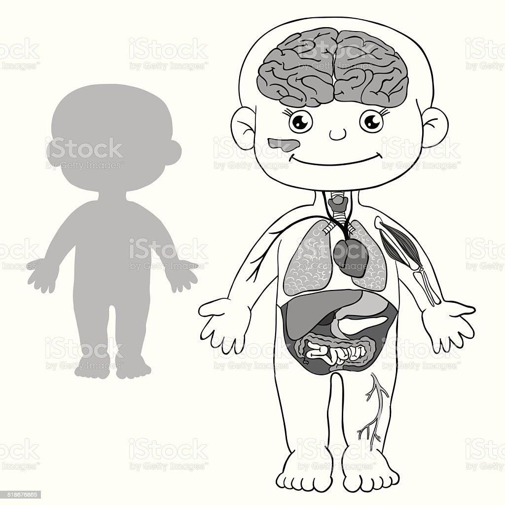 Anatomie Für Kinder Stock Vektor Art und mehr Bilder von Anatomie ...