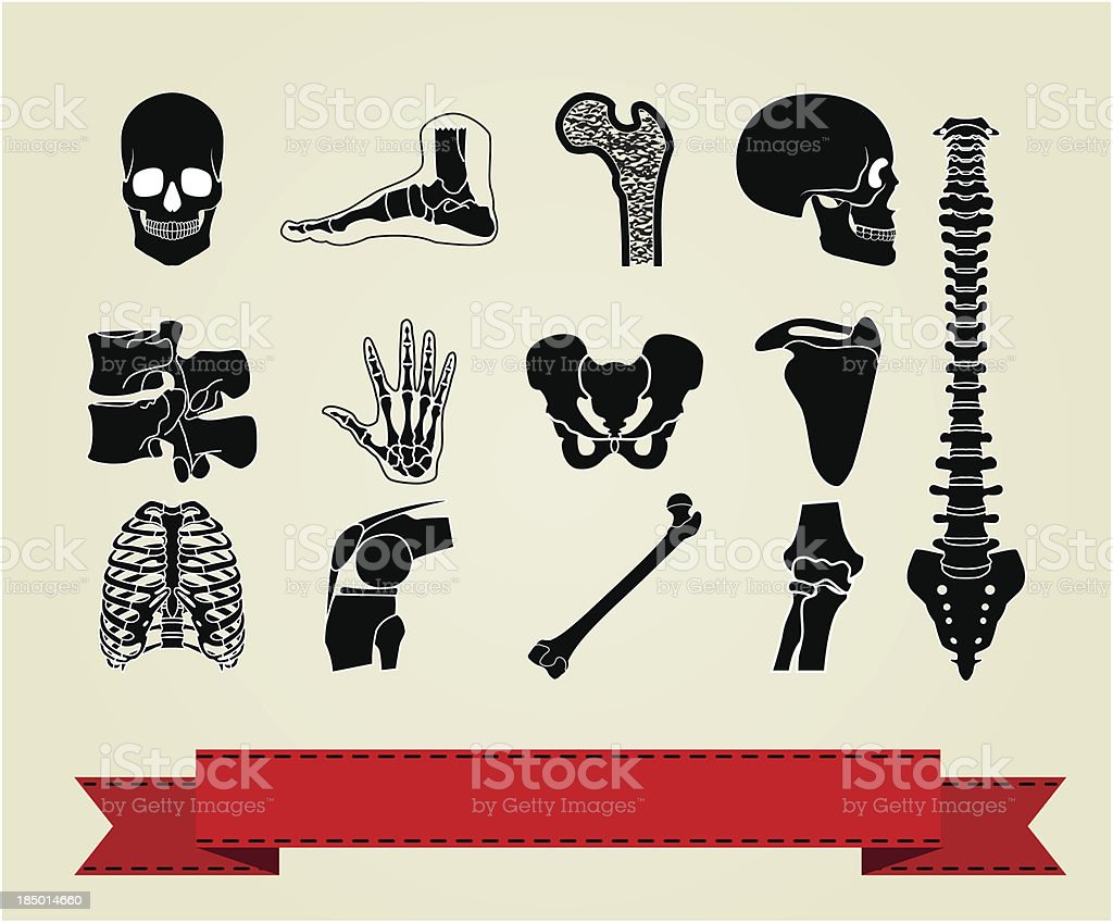 Anatomy icons set 2 royalty-free stock vector art
