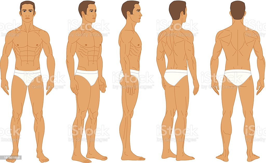 Anatomy Male Human Body Stock Vector Art & More Images of Adult ...