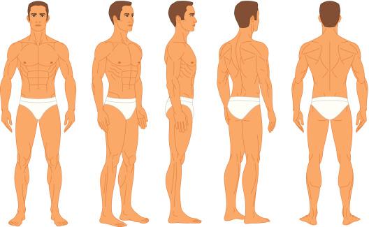 Anatomy - Male Human Body