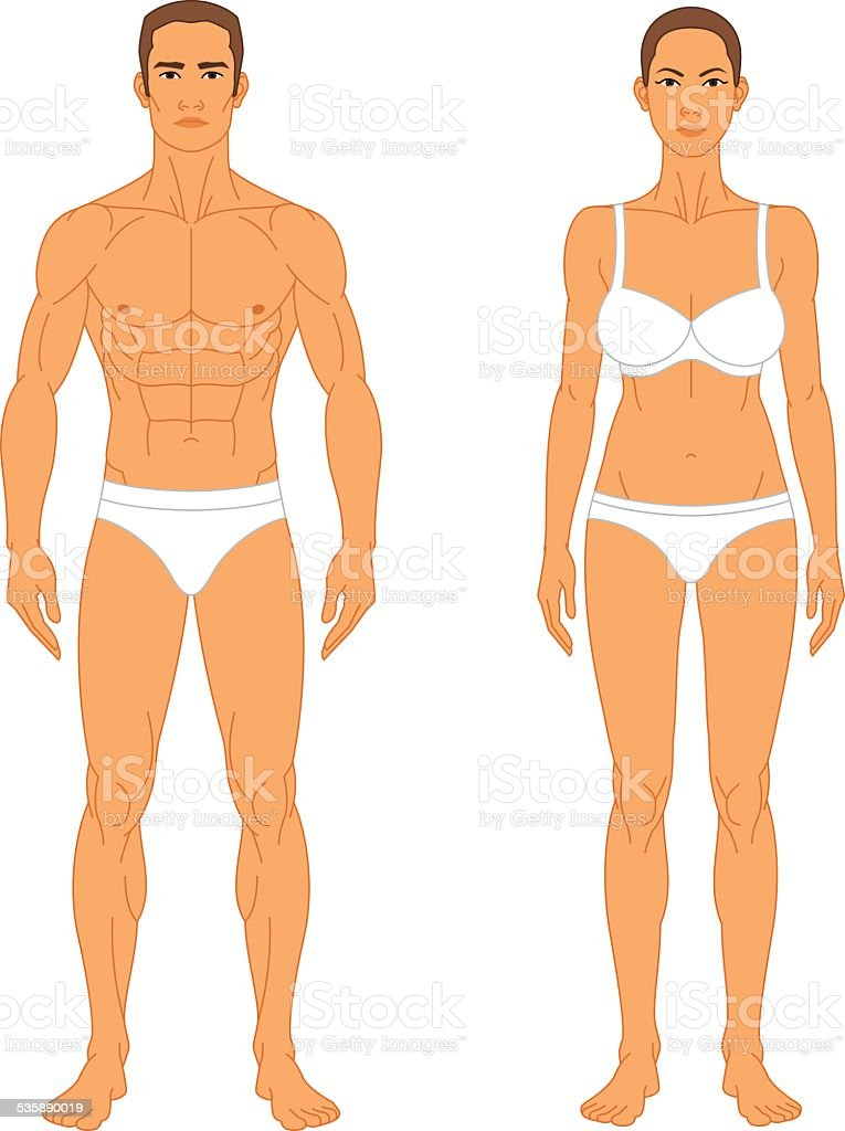 Anatomy Man And Woman Stock Vector Art & More Images of 2015 ...
