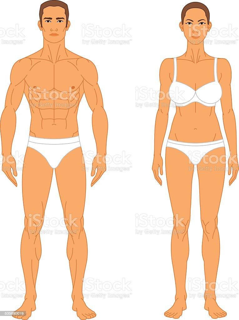 Anatomy - Man and Woman vector art illustration