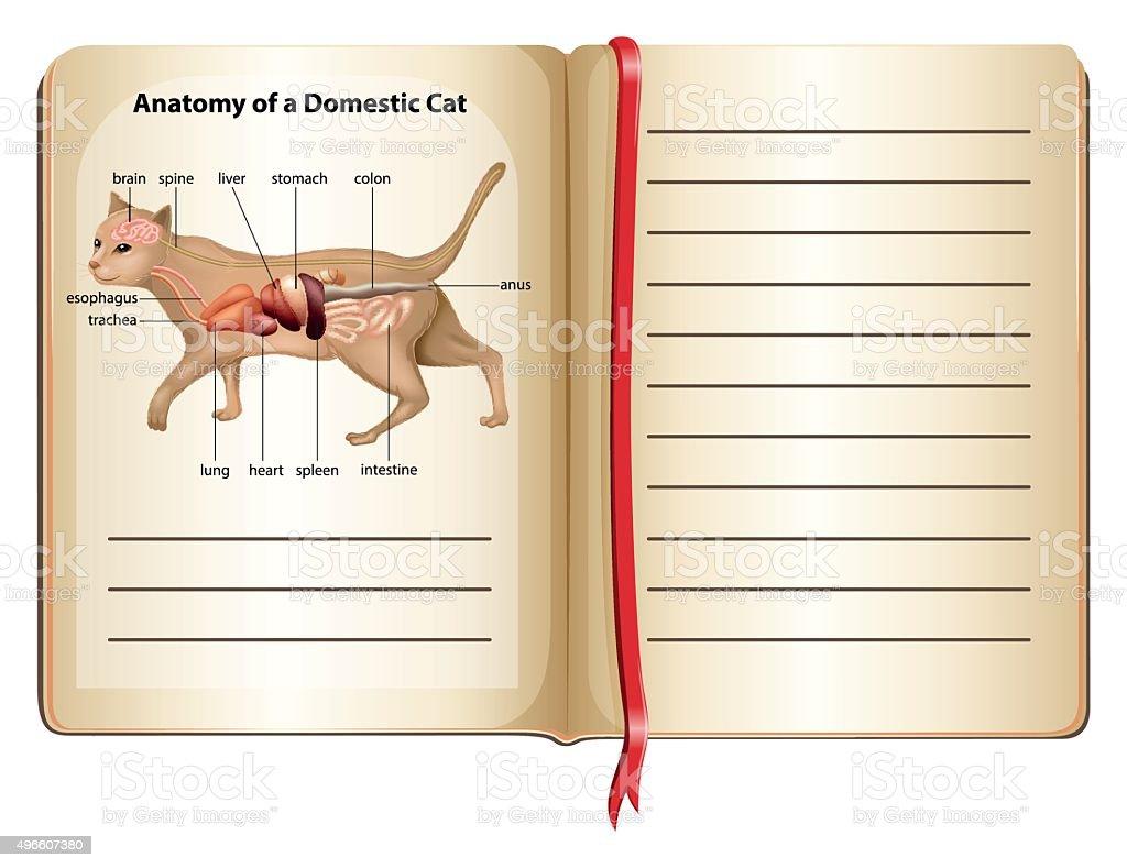 Ilustración de Anatomía De Un Gato Doméstico y más banco de imágenes ...