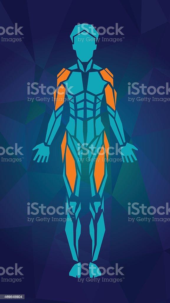 Anatomia Do Sistema Muscular Feminino Vista Frontal - Arte vetorial ...