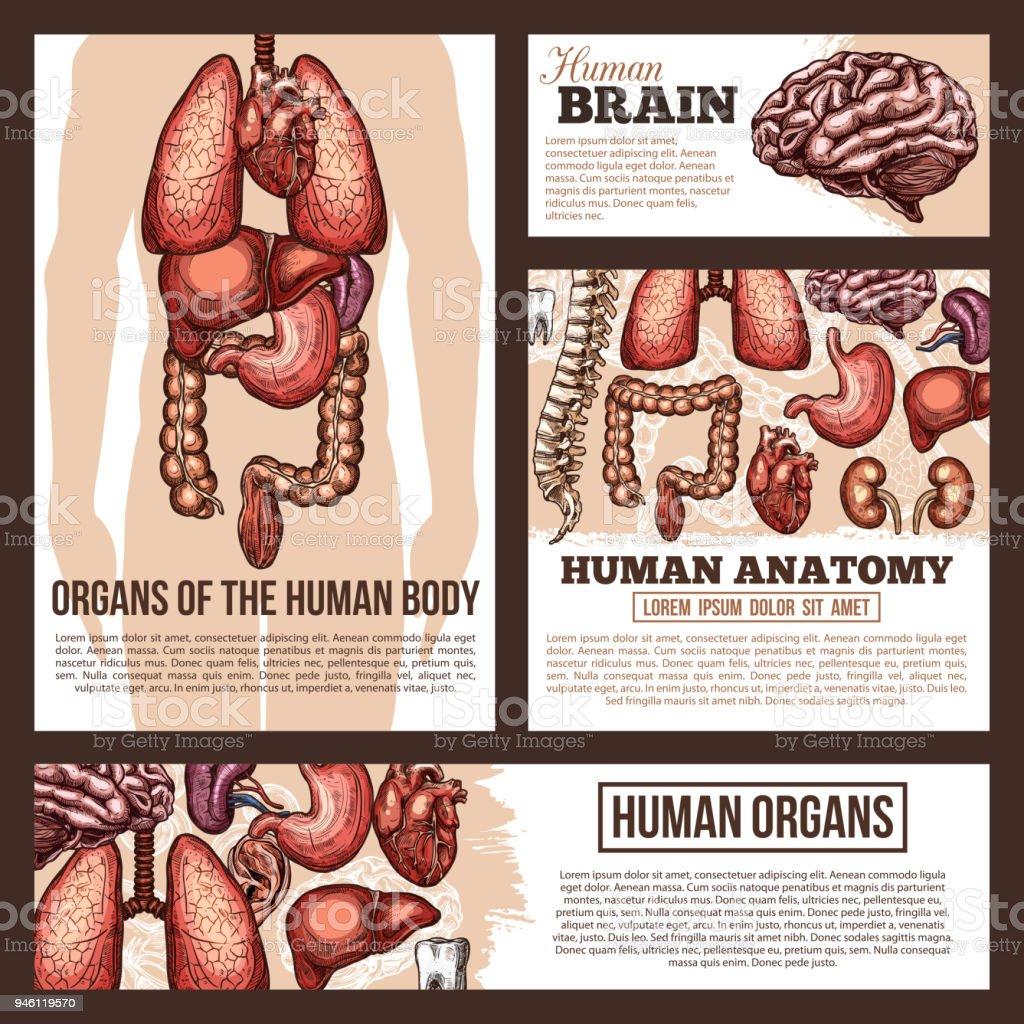 Anatomie Des Menschlichen Organen Skizze Banner Vorlage Stock Vektor ...