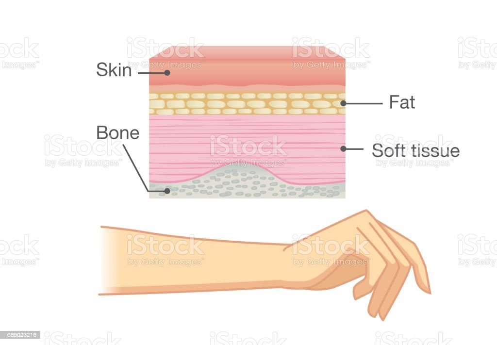 anatomy of human skin layer and arm stock vector 689023216 istock anatomy of human skin layer and arm stock vector more images of agreement 689023216 istock