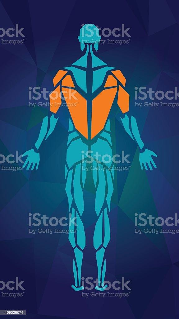 Ilustración de Anatomía Del Sistema Muscular Masculino Vista ...