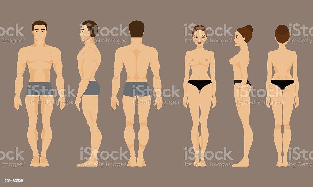 Anatomie Des Mann Und Frau Vektorillustration Stock Vektor Art und ...