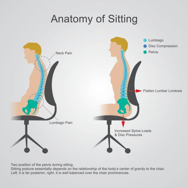 Anatomy of sitting. The lumbar region is sometimes referred to as the lower spine, or as an area of the back in its proximity. Vector graphic. sciatica stock illustrations