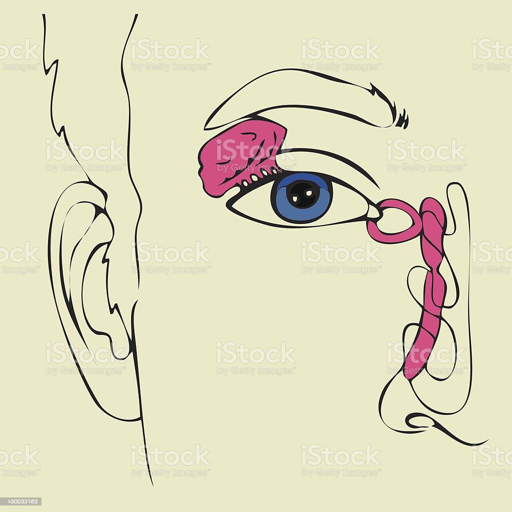 Ilustración de Anatomía Del Aparato Lagrimal y más banco de imágenes ...
