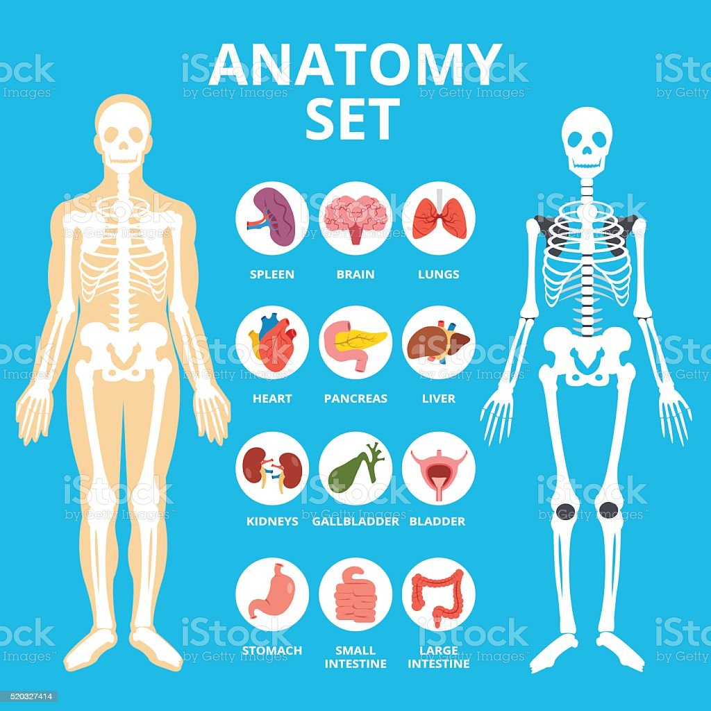 Anatomy set, anatomy infographics. Human Internal organs icons set vector art illustration