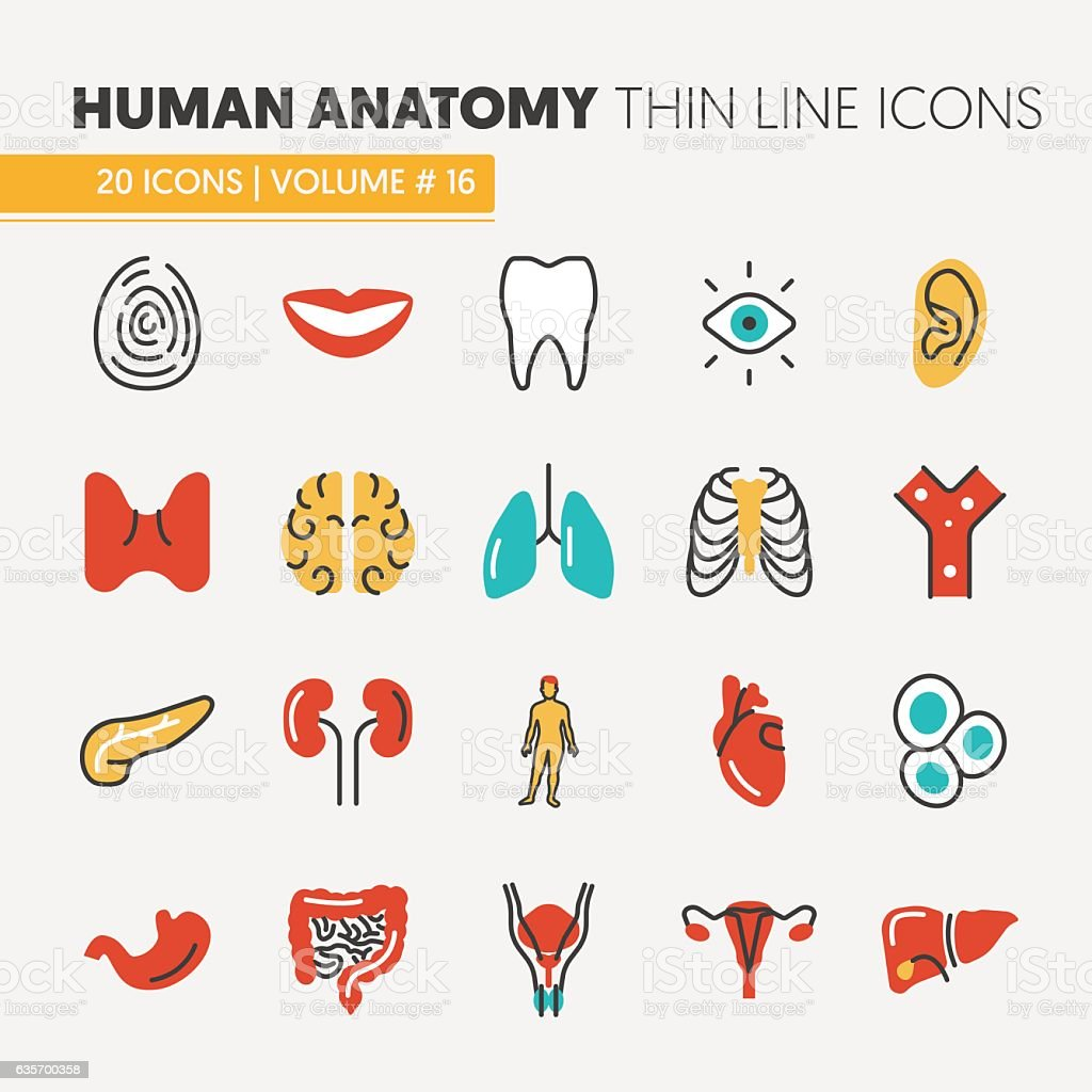 Anatomy Thin Line Icons Set with Body Parts vector art illustration